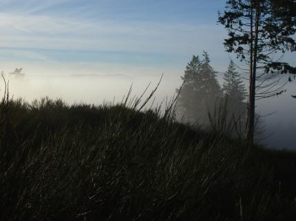 the mist 013-bl