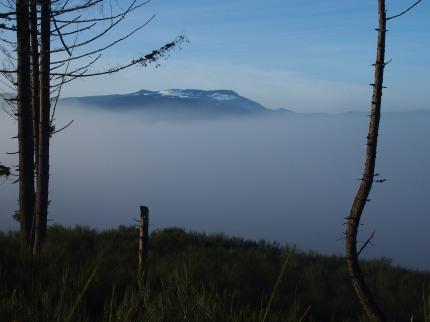 the mist 014-bl