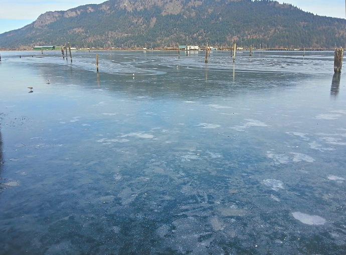 cowichan bay ice 2014-02-08 13.26.23[BL]
