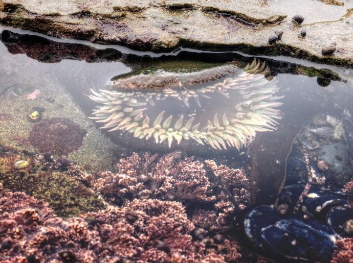 sombrio tidal pool 4 [BL]