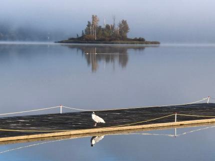 Quamichan Lake (1) [fl]
