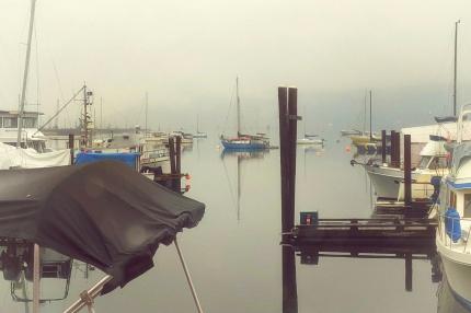 Good morning in the bay [fl]