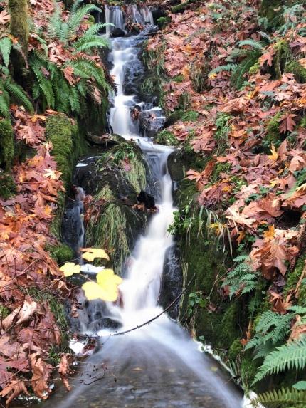 Manley Creek (1)